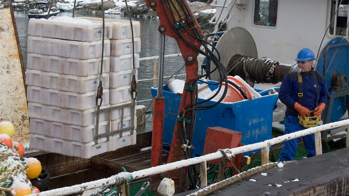 Unloading the shrimp harvest in the harbour of Ilulissat